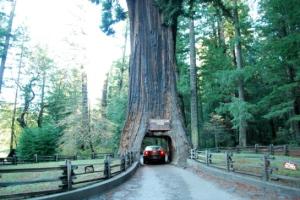 drivethru tree
