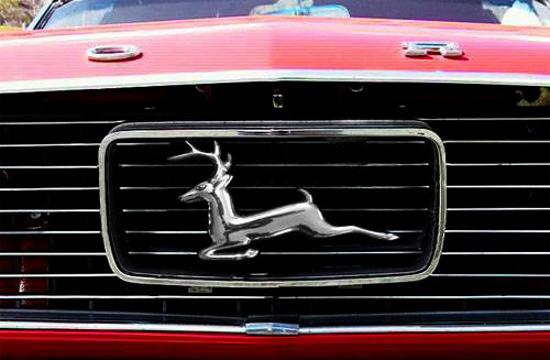 Mustang-reindeer-grill